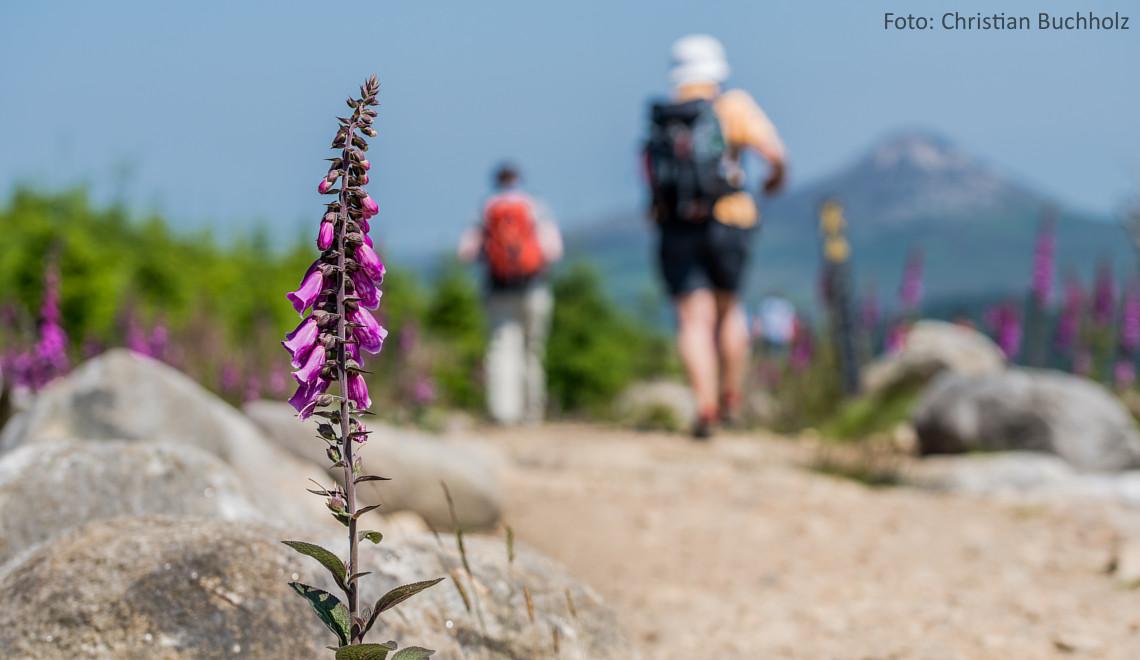 Wandern in den Wicklow Mountains (by Christian Birkholz)