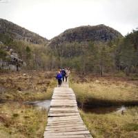 Holzbohlen über Sumpfgebiet am Preikestolen