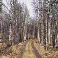Wanderung im Nordland Nationalpark
