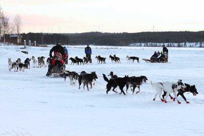 Huskytour bei der Highländer Reisen Winterreise