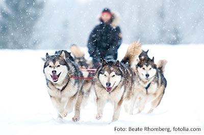Winterreise: Husky-Schnuppertage in Schwedisch-Lappland