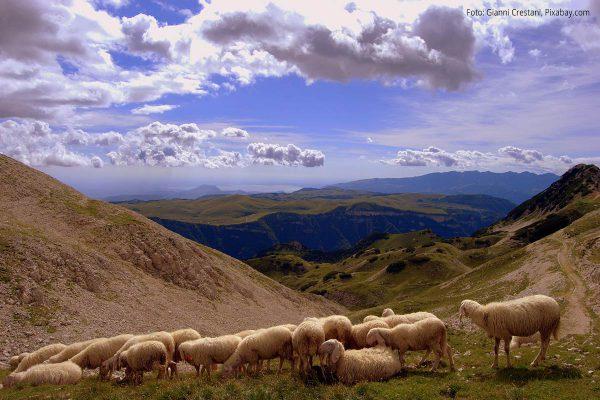 Berglandschaft mit Schafen