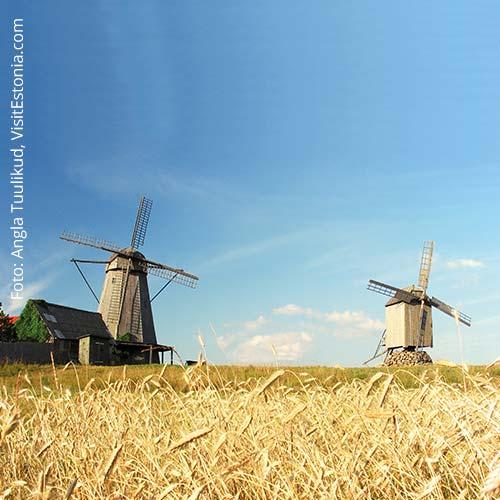 Landschaft mit Windmühlen auf Saaremaa