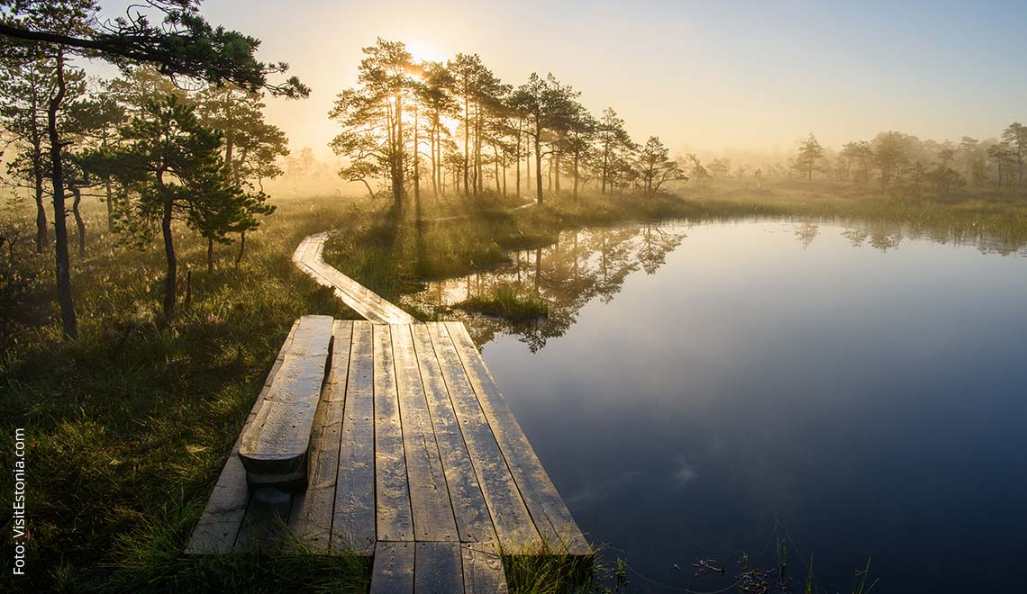 Acht Gründe, warum Estland eine Reise wert ist
