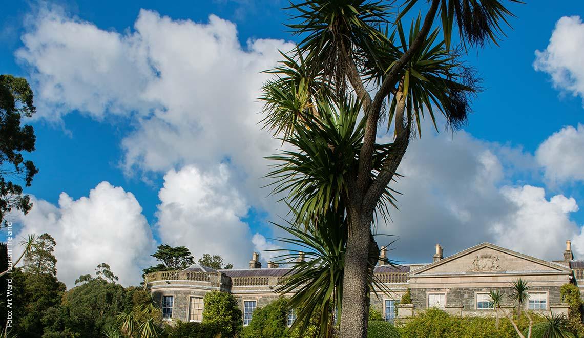 Palmen bei Mount Steward, Nordirland