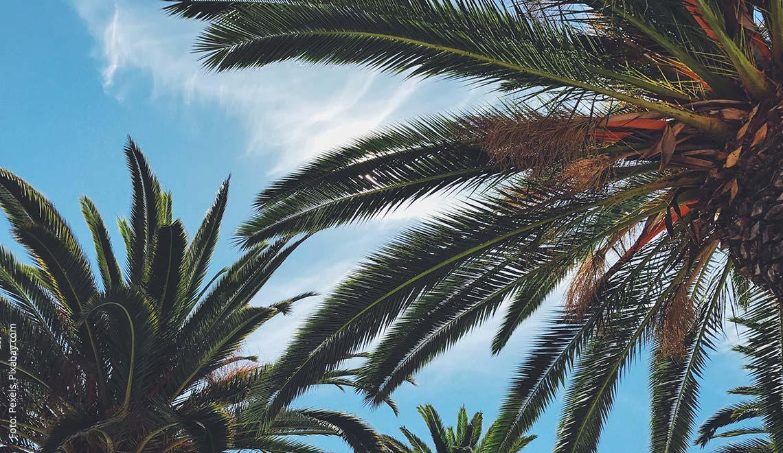 Palmen in der Karibik